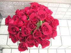 生花の紅薔薇