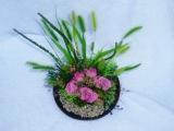 ミニローズと野草の寄せ植え♪